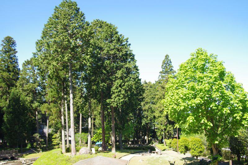 水分れ公園の新緑