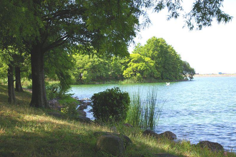 天満大池の朝景色