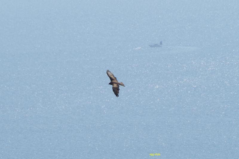 鳶を下に見て、明石海峡