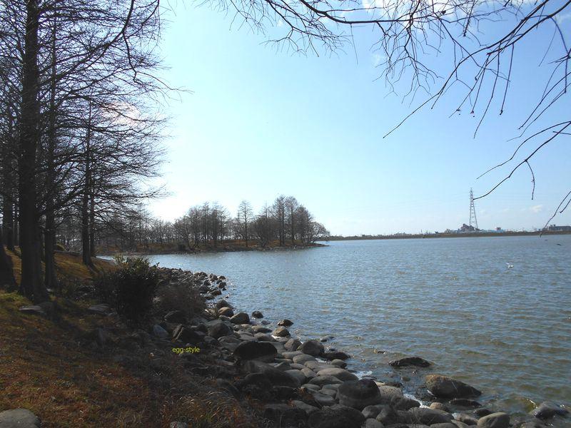 天満大池公園の冬景色