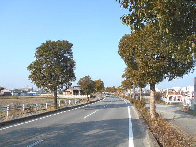 別府鉄道廃線跡を歩く:公園の先は一般道