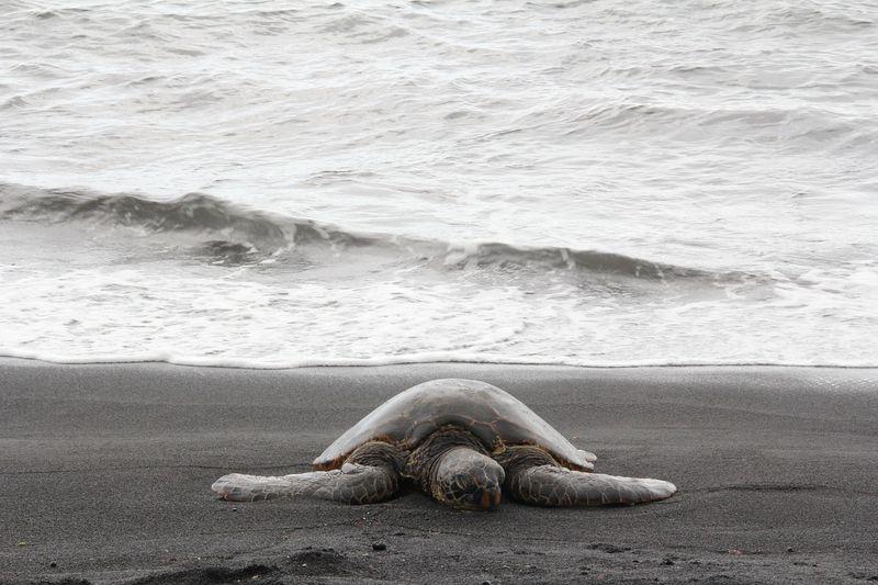 byPixabay sea-turtle-688255