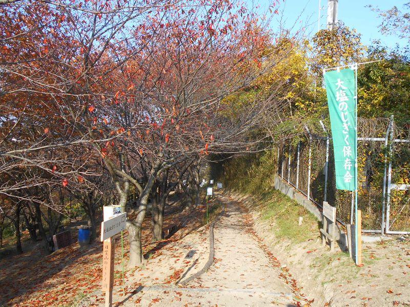 大塩ノジギク保存会 園の入口