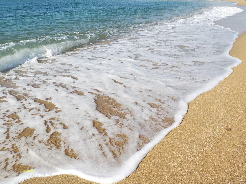 明石砂浜海岸もきれいになったが栄養不足とは。