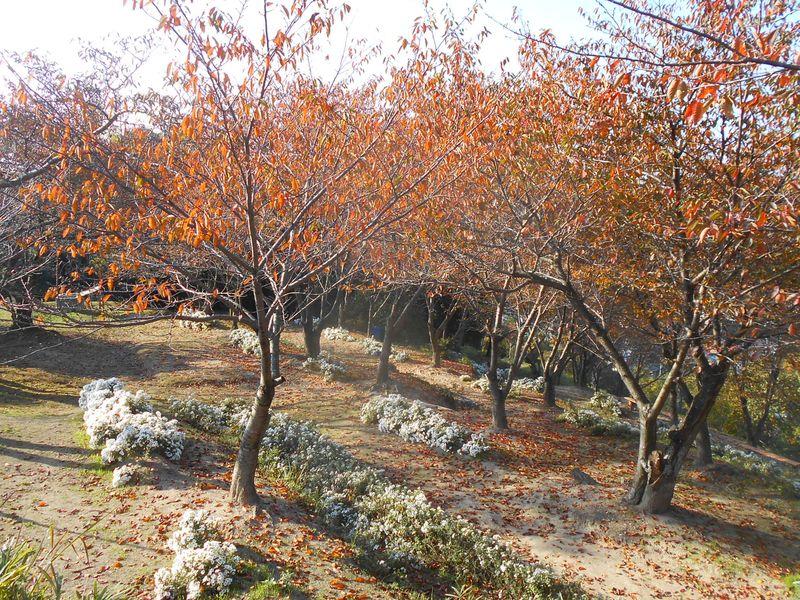 秋のホッとする風景を作っている