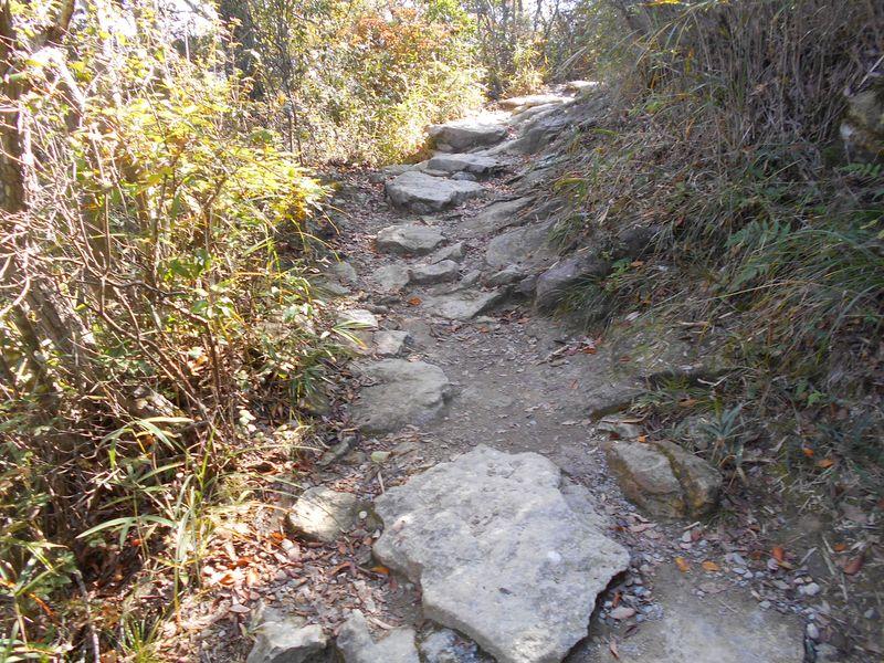 登山道らしいところもあるが、石で歩きやすい