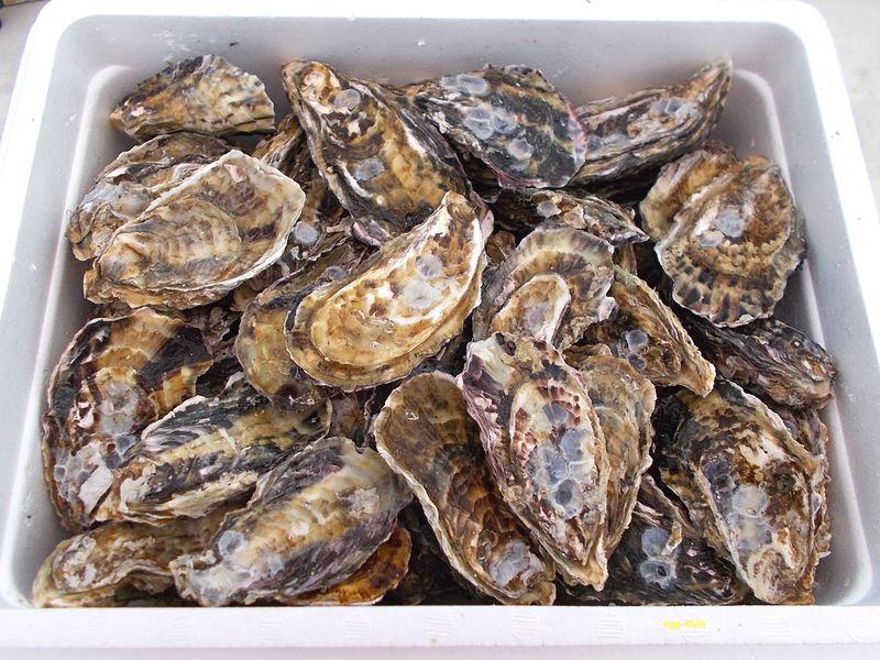 牡蠣 中サイズながら80個ほど入っていました