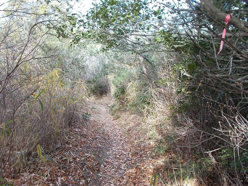 歩きやすい登山道 赤いリボンや白いリボンが巡視路の目印なのか