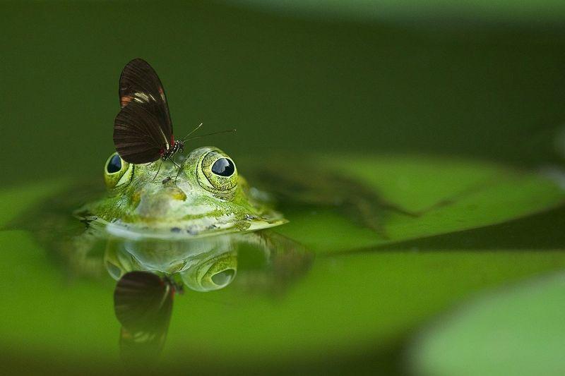 byPixabay frog-540812