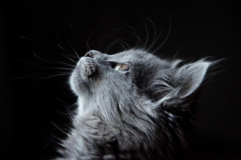 byPixabay cat-4977436