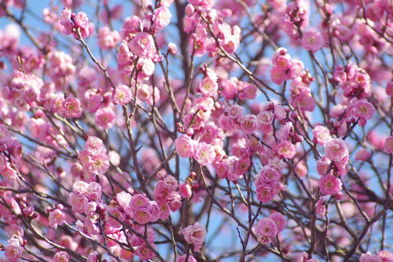 なんと言っても春が近づいた色です 2/9
