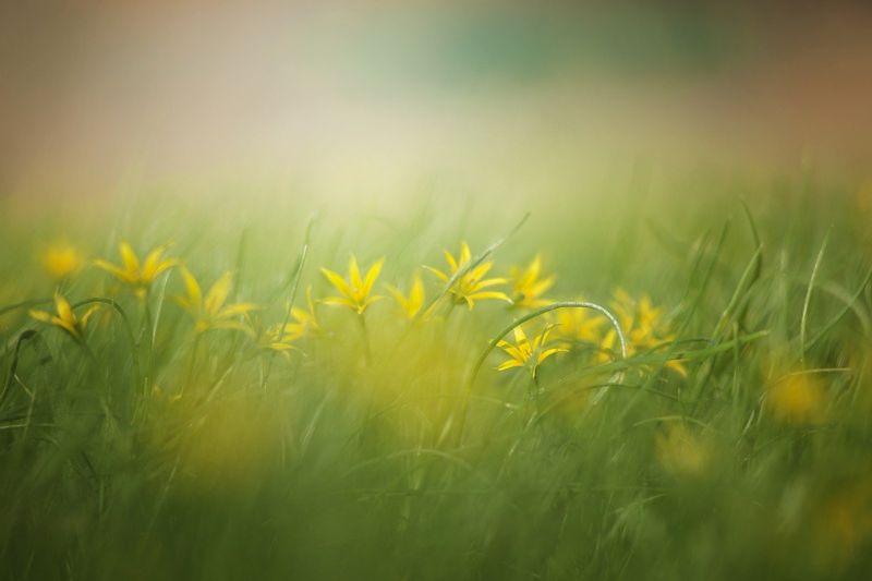 byPixabay grass-3089791
