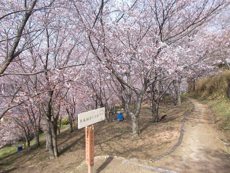 日笠山山腹ののじぎく園から山頂に林立する この道は のじぎく園のルート