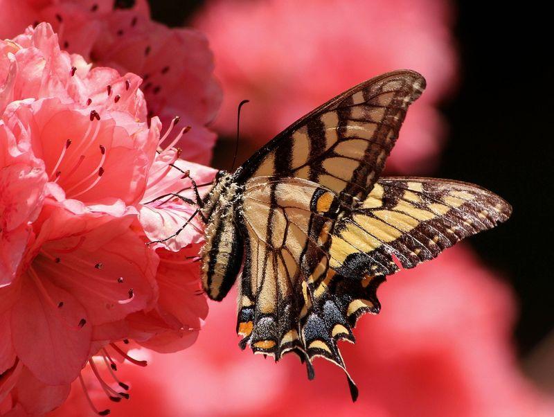 byPixabay butterfly-108616