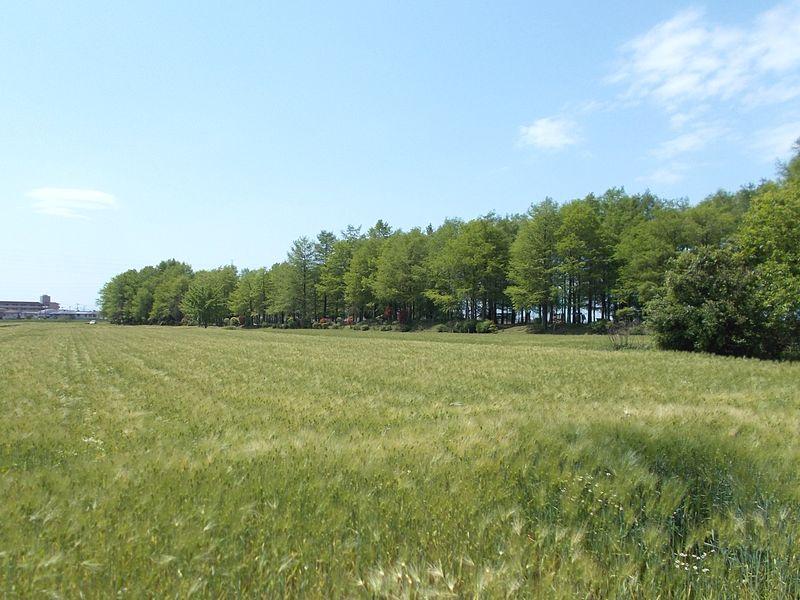 麦畑から見る景色は、播州とは思えない