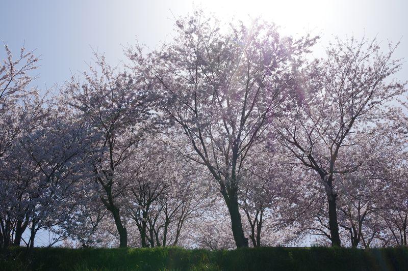 朝日に逆光で見ると、違った美しさを感じる
