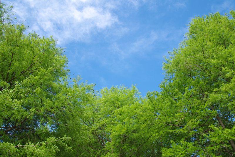 新緑に雨後の青空 気持ちの良い初夏です