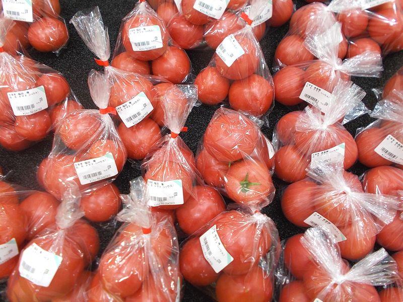 赤いトマトは夏の野菜。緑の中で存在感を表現しています