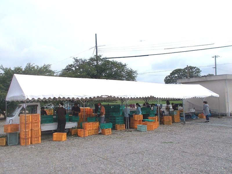期間限定の朝どりコーン直売所 空き地にテント