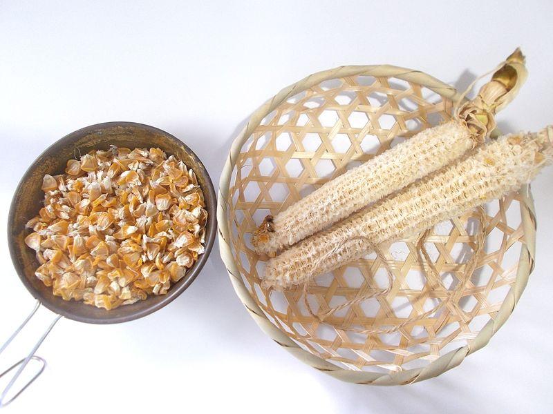 トウモロコシ2本で、シェラカップ1杯分の収穫