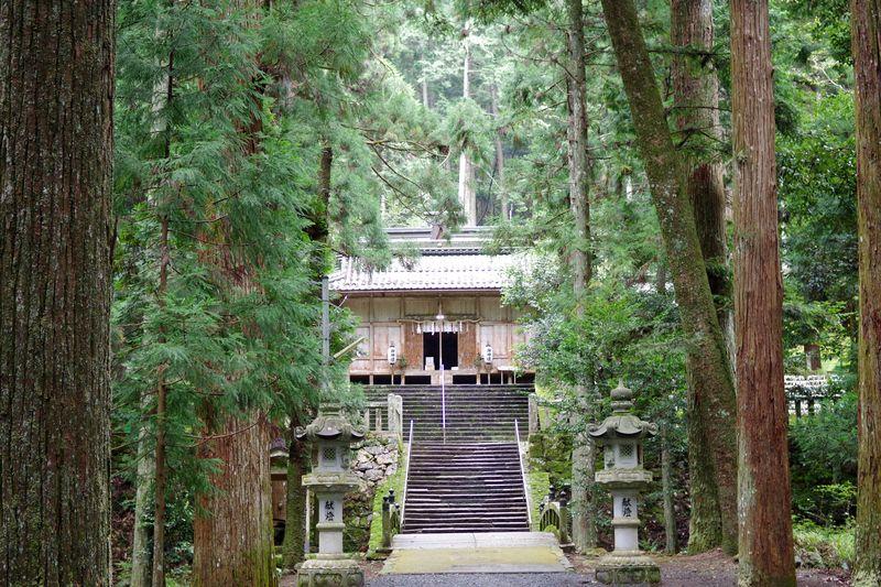 荘厳な佇まいな内尾神社 巨杉はお社の周囲